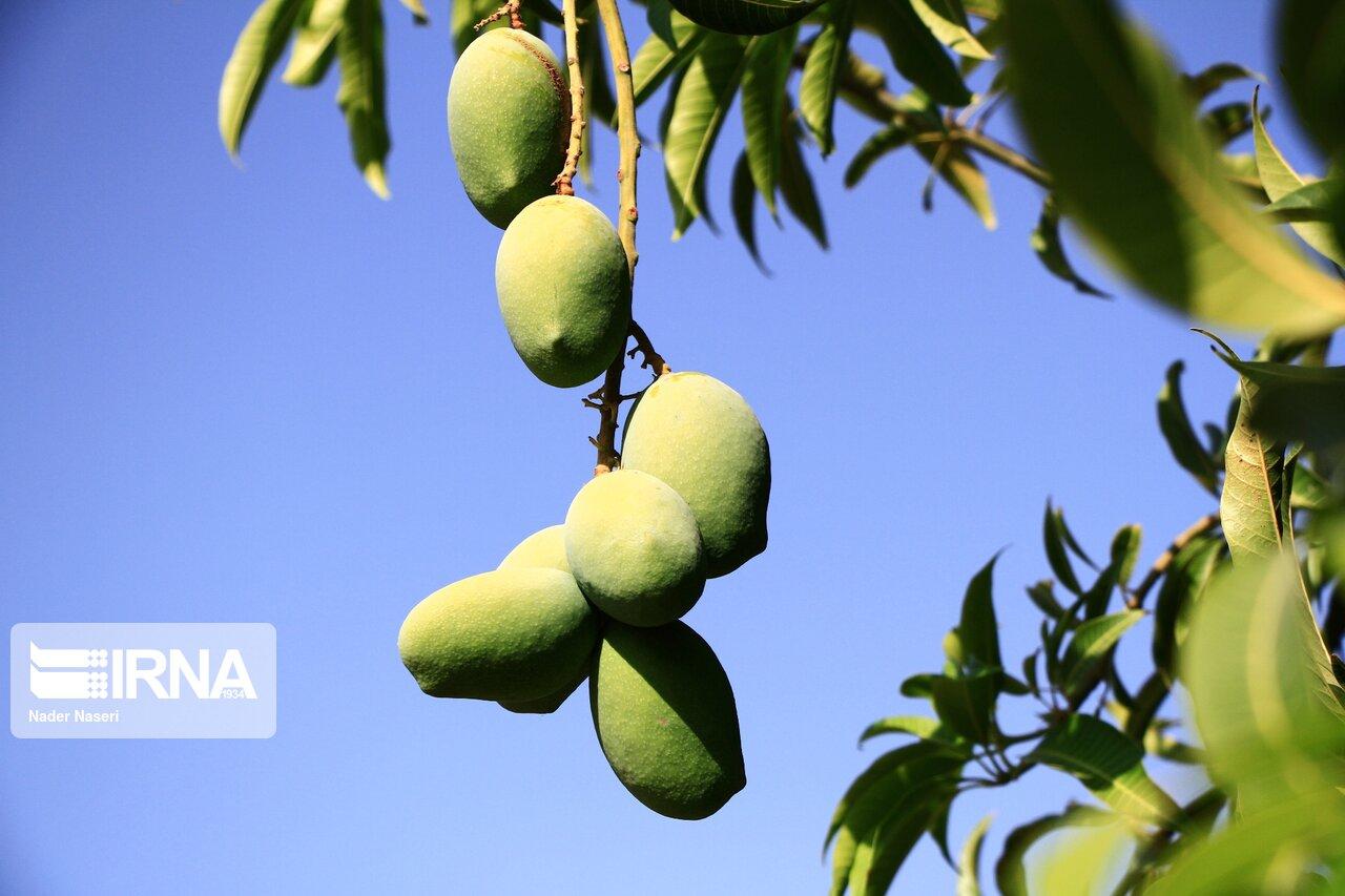 قطب میوه های گرمسیری